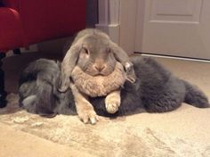 Mother bunny shows her son who's boss - April 8, 2013