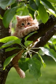 kitten learning to climb tree
