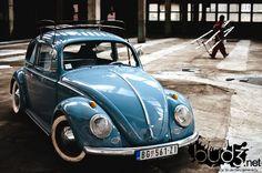 sweet light blue bug