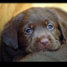 Future pup :o)