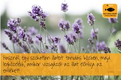 Tipp tanuláshoz: próbáld ki vizsgaidőszakban az ismétléshez! IQfactory Plants, Plant, Planets