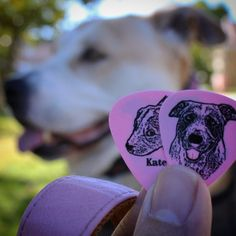 Only rock stars have their own #guitarpick. ;-) #katedog #claytoncustom