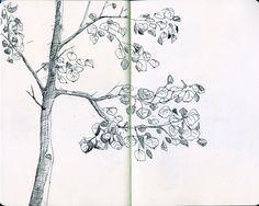 aspen sketch