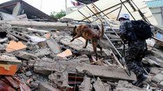 Con la ayuda de perros entrenados, rescatistas realizan su labor en la ciudad de  Manta, en Manabi, el 17 de abril  de 2016. Fotografía tomada en una de las ciudades más afectadas del Ecuador , Pedernales , un día después de un terremoto de 7,8 grados de magnitud que sacudió al país , el 17 de abril de 2016. El número de víctimas del gran terremoto en Ecuador se elevó el domingo a 246 muertos y 2.527 heridos , dijo el vicepresidente del país . / FOTO AFP / RODRIGO BUENDIA