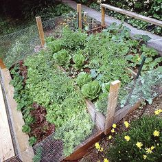 Planning Your First Vegetable Garden Great tips.