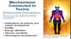 Detox Fundamentals with Deanna Minich, PhD, CNS,  FACN - YouTube