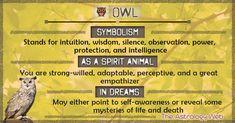 Owl Meaning and Symbolism Spirit Animal Quiz, Spirit Animal Totem, Animal Spirit Guides, Animal Totems, Owl Tattoo Meaning, Animal Meanings, Dream Symbols, Dream Meanings, Animal Symbolism