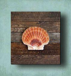 Beach Decor Seashell on driftwood panel
