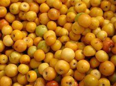 Fruta tipica mexicana llamada nanches