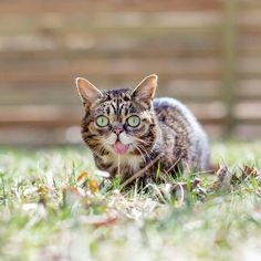 Lil Bub celebrates Earth Day