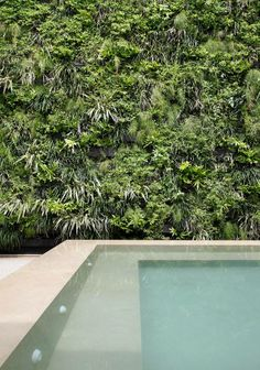 Apartamento MB – Ipanema V / Izabela Lessa #patio #spa #view #green #wall