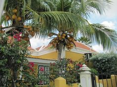 A house in Aruba <3