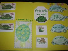 Turtle Lapbooks (His Mercy Is New) Find FREE printables here: http://www.homeschoolshare.com/turtles.php