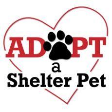 Adopt a Shelter Pet Poster!!!!