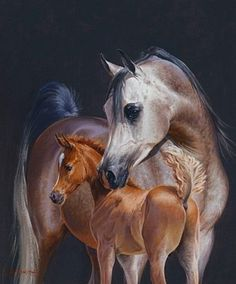 Arabian horse painting by Peter Smith Most Beautiful Animals, Beautiful Horses, Arabian Art, Arabian Horses, Horse Artwork, Animal Paintings, Horse Paintings, Horse Portrait, Horse Drawings