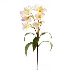 <div>You can create that perfect mood with this pink and cream plumeria. This elegant stem can ...