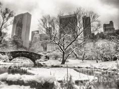 Black and White Photo of Central Park, New York City covered in Snow during Winter