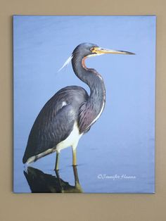 Canvas Print of Original Photography  Great Blue Heron by MidnightandMagnolias on Etsy
