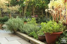 A Culinary Kitchen Garden Perfect for Small Spaces