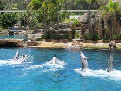 布里斯本❤️海豚表演
