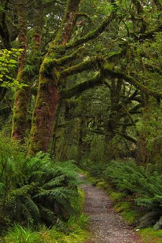 Clinton Valley Rainforest in Fiordland National Park, New Zealand