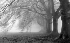 Black And White Photography Nature Wallpaper Hd Pictures 4 HD Wallpapers