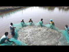 Fishing Girls, Fishing Life, Going Fishing, Crappie Fishing, Carp Fishing, Fishing Rod, How To Catch Crappie, Cast Nets, Aqua Culture