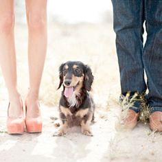 Look at that doxies. This will be my daughters with their guys (someday) and all 3 of our doxies
