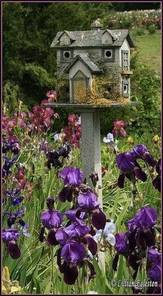 Charming birdhouse in a field of irises