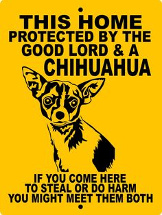Effective Potty Training Chihuahua Consistency Is Key Ideas. Brilliant Potty Training Chihuahua Consistency Is Key Ideas. Chihuahua Quotes, Cute Chihuahua, Chihuahua Puppies, Yorkie, Dogs And Puppies, Chihuahuas, Dog Quotes, Pomeranian Pups, Pet Dogs