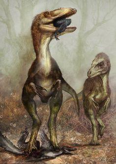 Sinocalliopteryx gigas, shown here feeding on the dromaeosaur Sinornithosaurus.