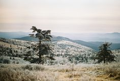 "istillshootfilm: "" Film Photo By: Ben Keoseyan "" Grayson Highlands State Park, VA Canon AE-1, Kodak Portra 400 "" """