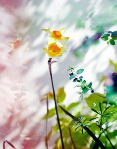Photographer Paul Rousteau - Personal work - Fleurs de Paris #outdoor #flower #perfume