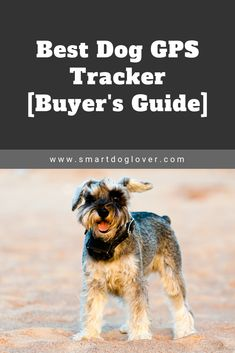 Best Dog GPS Tracker – Buyer's Guide trending dog products from our store and get up to off. You will not find this rare dog accessories in any other store, so grab this Limited Time Discount Now! Best Dog Training Books, Rare Dogs, Wireless Dog Fence, Dog Store, Dog Hacks, Find Pets, Pet Health, Dog Accessories, Best Dogs