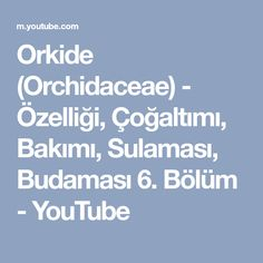 Orkide (Orchidaceae) - Özelliği, Çoğaltımı, Bakımı, Sulaması, Budaması 6. Bölüm - YouTube