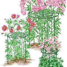 Peony Care, Peonies, Peony Bush, Growing Peonies: Gardener's Supply