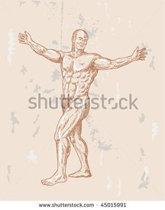 vector hand sketched illustration of the male human anatomy done in renaissance style. #humanbody #sketch #illustration