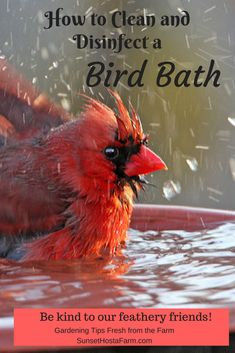 We all know that stagnant water carries diseases that can spread quickly from one bird to the whole flock.  Not to mention it's a great breeding ground for mosquitoes.  Learn how to clean and sanitize your birdbaths for healthy, happy birds.