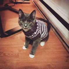 kitty sweater! free pattern is for an x-small dog sweater