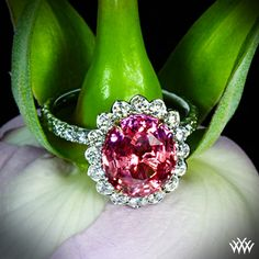 """This """"Imperial Lotus Padparadscha Halo"""" holds a gorgeous AGTA certified natural Padparadscha Sapphire that is surrounded by 40 Leon Megé melee diamonds G/H VS) and has 6 pink diamonds nestled in the Rose Gold head. Colored Engagement Rings, Antique Engagement Rings, I Love Jewelry, Gems Jewelry, Jewlery, Beaded Jewelry, Jewelry Box, Pink Sapphire, Pink Diamonds"""