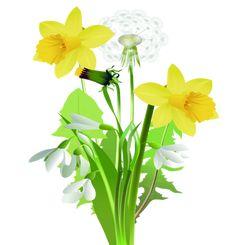 fleurs,flores,flowers,bloemen,png