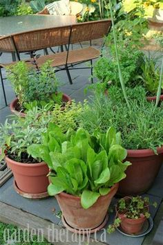 Backyard Patio Project: Container Herb Garden