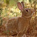 Rabbit  Guile     Paradox and contradiction     Living by one's own wits     Receiving hidden teachings and intuitive messages     Quick-thinking     Humility     Moving through fear     Strengthening intuition