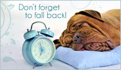 """Early Sunday morning it's time for us to """"fall back,"""" adjusting our clocks one hour backward to segue out of Daylight Saving Time and back to Standard Time. Does that extra hour affect our pets? You bet it does. Daylight Savings Fall Back, Daylight Savings Time Begins, Blue Clocks, Clocks Back, Spring Forward Fall Back, Christian Ecards, Purina Dog Chow, Sleepy Dogs, Sleepy Head"""