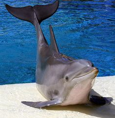 OMG!!! To die for:) I've wanted to per a dolphin my whole life I have yet to but I know  I will someday! :D