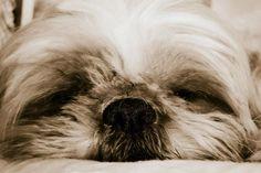 My cute little puppy, Yvette (3)