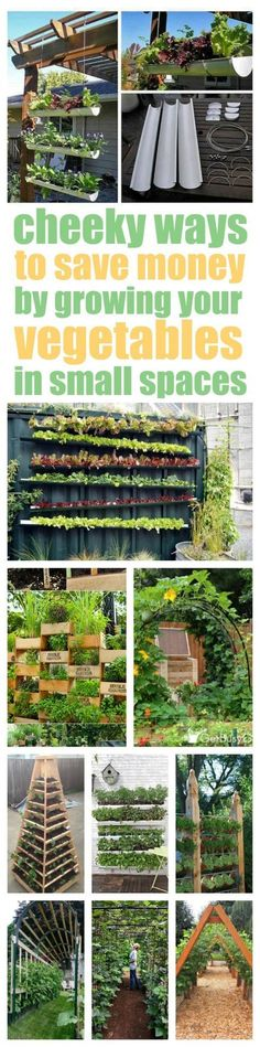 Definitely CHEEKY! And a little bit sneaky, too. Never thought of attaching gutters to a wall to grow lettuce. How awesome! Check out these vertical vegetable garden ideas that will solve your garden space problems so you can start growing your own veggies today!