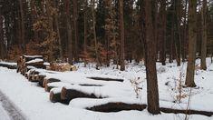 ...  świat wokół mnie   ...: ... jeszcze zimowy las ...
