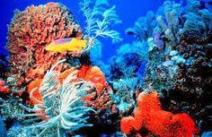 Πλησίστιος...: Australia: Grande Barriera Corallina