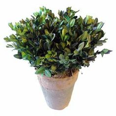 """Add classic appeal to your decor with this stately preserved boxwood arrangement.  Product: Preserved botanical arrangementConstruction Material: Preserved boxwoodColor: GreenDimensions: 10"""" H x 8"""" DiameterCleaning and Care: Dust lightly"""